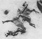 egk-horse2